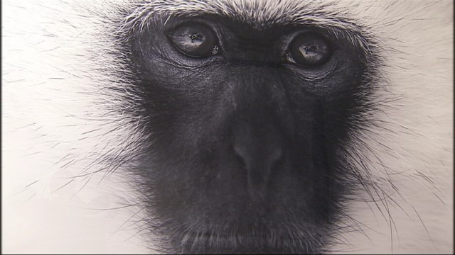 Travel Gallery : les photos animalières de Tom D. Jones
