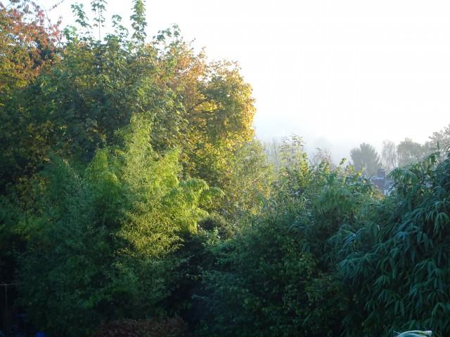 Un dimanche d'automne dans le brouillard