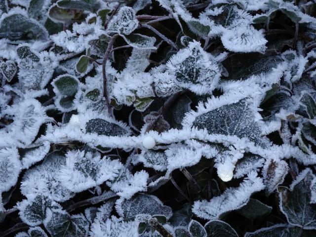 Un début d'année 2017 sous la grisaille et la neige
