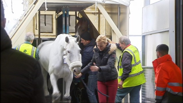 Retour d'Abu Dhabi pour ces chevaux au Horse Inn de Liège Airport
