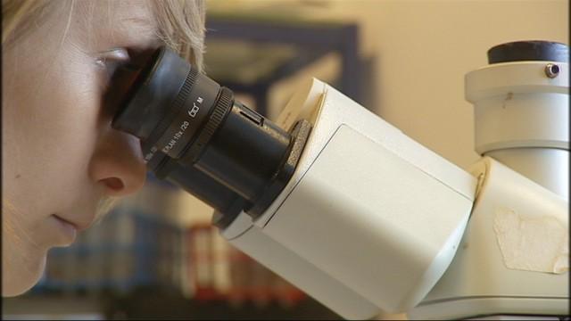 Université : thérapie cellulaire pour traiter l'asthme