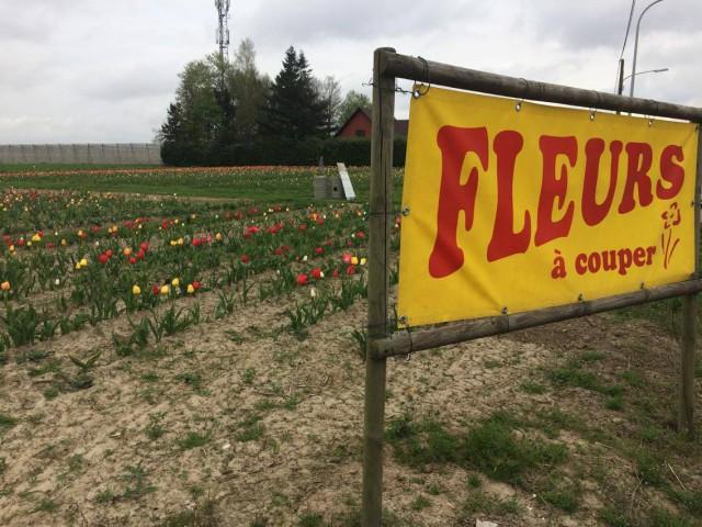 Hognoul : on lui vole les fleurs en libre service