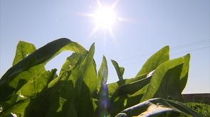 Les tendances prédisent un été plus chaud et plus sec que la moyenne