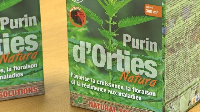 Le purin d'orties va être commercialisé en Belgique