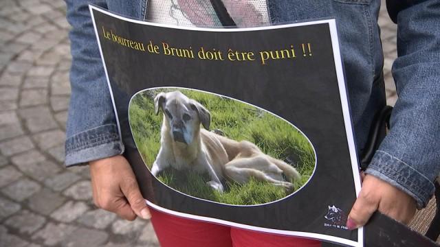 Suspension du prononcé pour le propriétaire de Bruni le labrador