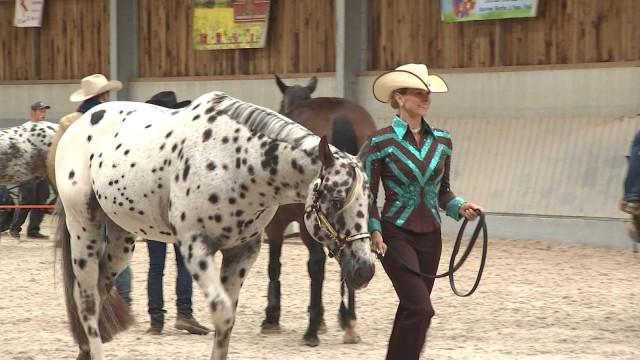 L'équitation western en vedette ce week-end à Awans