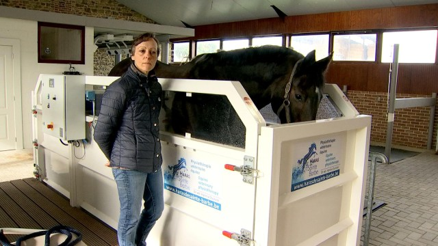 Engis : un centre de revalidation pour les chevaux
