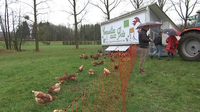 Sprimont : un poulailler mobile accueillant 200 poules