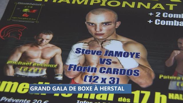 Herstal: un titre européen en jeu lors du gala de boxe