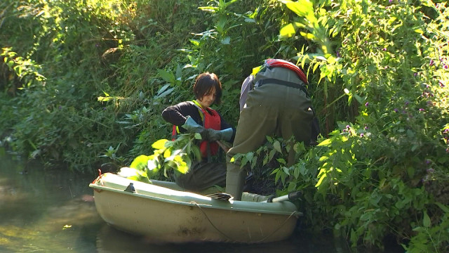 Geer : la barque, pour arracher la balsamine de l'Himalaya