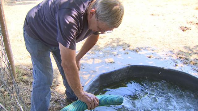Tournées eau et foin pour les Amis des Chevaux du Marais