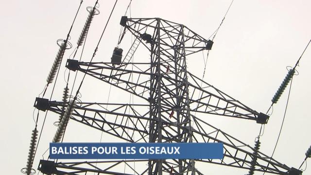 Protection des oiseaux : des balises sur les câbles électriques