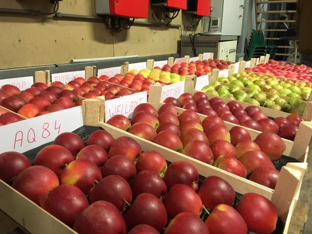 Wallonie : soutenir la filière horticole comestible