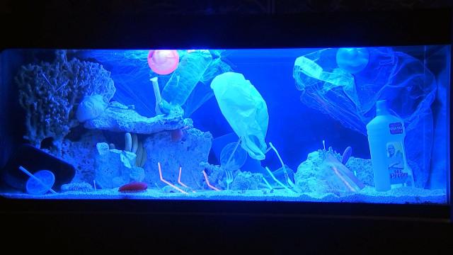 Un océan de plastique, c'est MER'dique !