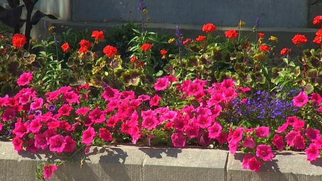 Des fleurs pour embellir Stockay