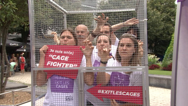 "Gaia recrute des ""cage fighters"""
