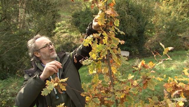 Donner des arbres pour planter une forêt comestible