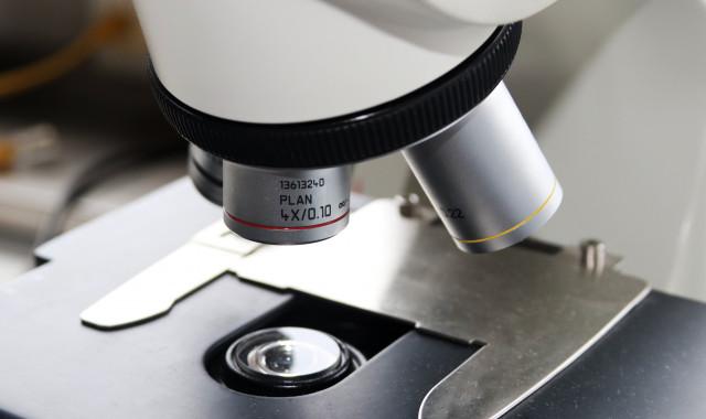 Une molécule naturelle pour venir soutenir un traitement contre le cancer du colon (ULiege)