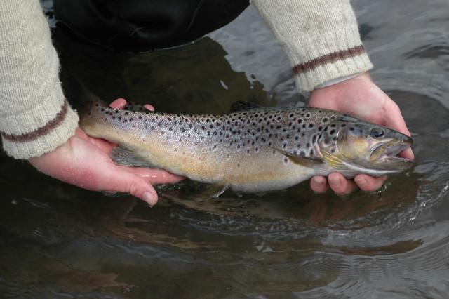 Pas d'ouverture de la pêche ce 21 mars
