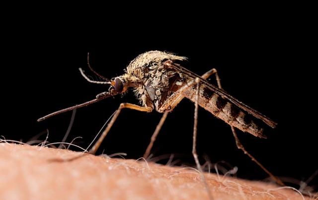 Chaleur : moustiques et mouches vont proliférer
