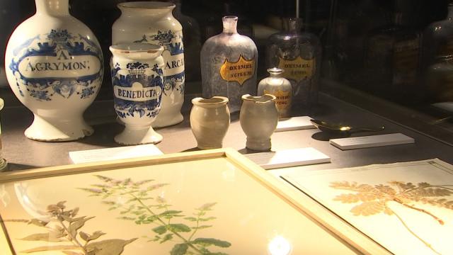 Les secrets de botanique liégeois à l'archéoforum