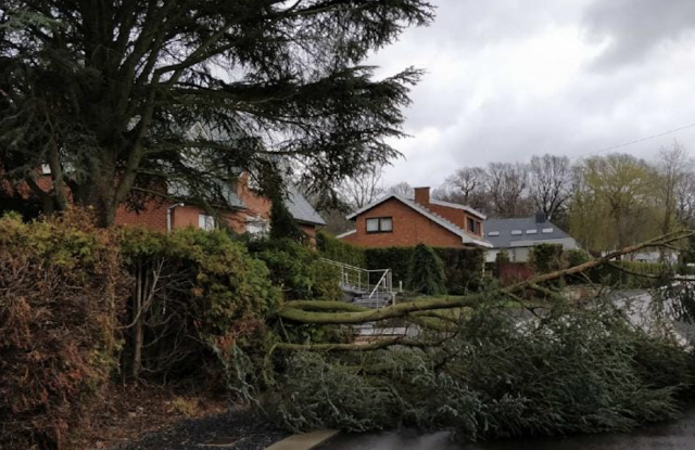 Chute d'arbre à Ivoz-Ramet: une voiture ainsi que des câbles électriques endommagés