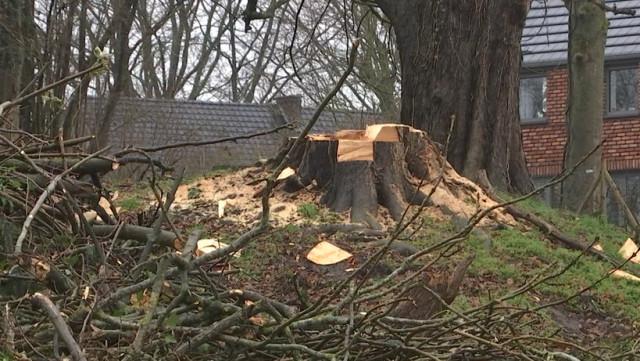 Héron: 4 arbres remarquables abattus sans autorisation!