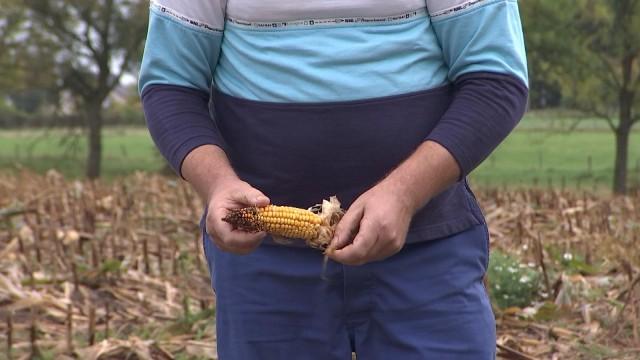Agriculteurs et  sangliers : cohabitation bien difficile