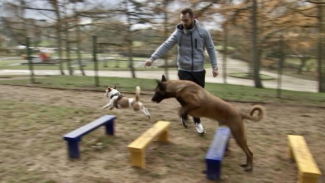 Alleur : un nouvel endroit réservé aux chiens
