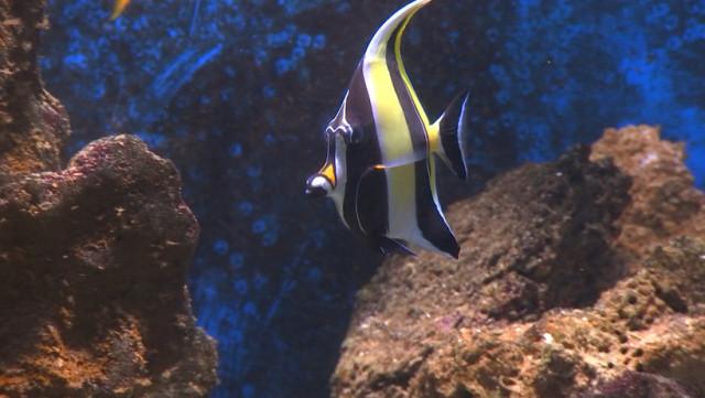 Aquarium : fermeture temporaire des bassins et grands projets pour 2022