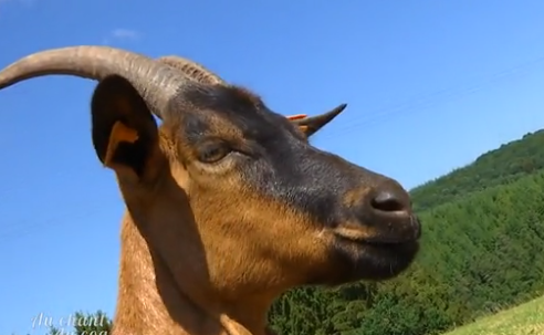 Au chant du coq: La ferme du Bierleux à Stoumont