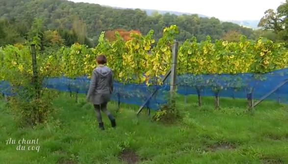 Au Chant du coq : les vins wallons