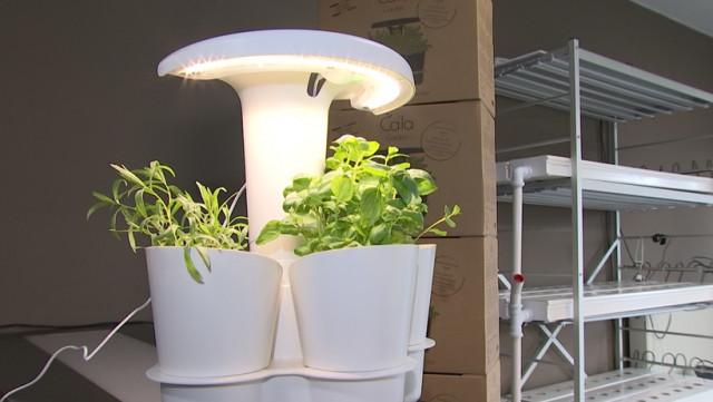 Calla Garden développe le potager d'intérieur pour restaurateurs