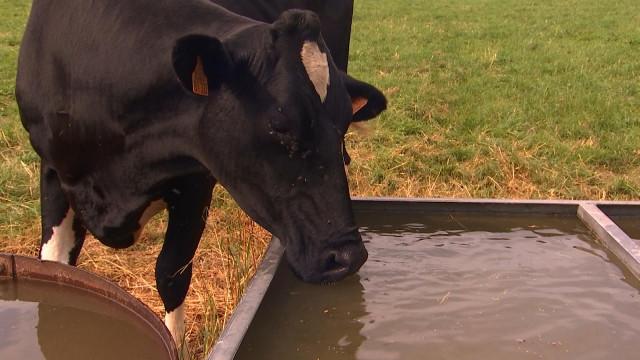 Canicule : cultures et bétail souffrent