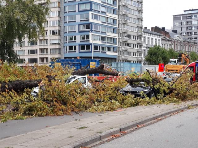 Chute de branche d'arbre à Liège, un blessé léger
