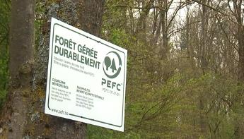 """Comment reconnaître du bois """"durable"""" ?"""