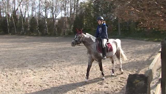 Covid 19: Pas de confinement pour les chevaux