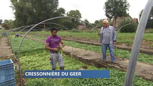 Cressonnière d'Omal, la plus grande de Wallonie