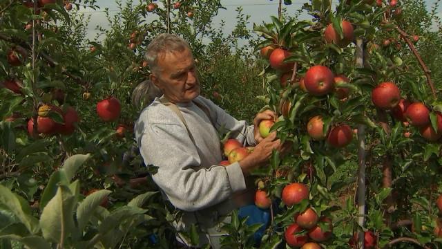 Dalhem : 5 jours d'autocueillette de fruits au verger