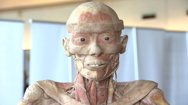 Des corps humains exposés à Liège