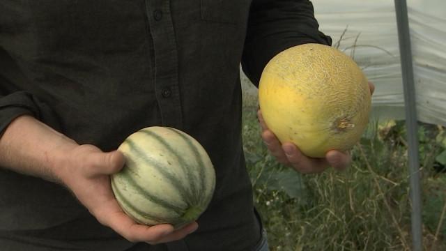 Des melons belges à Antheit vendus exclusivement à la ferme