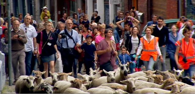 Des nombreux Liégeois pour la transhumance des moutons
