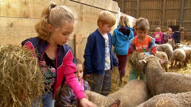 Donceel: les moutons au centre d'un stage à la ferme Schalenbourg