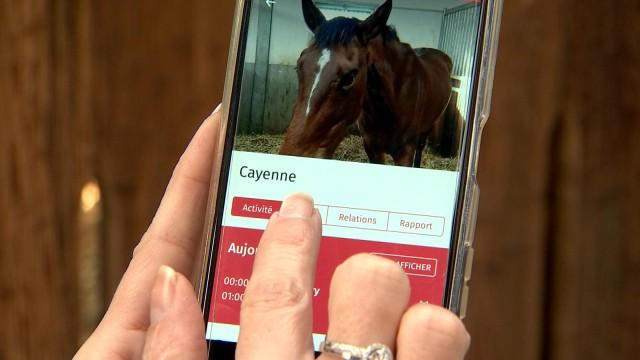 Ekism ID : la carte d'identité de votre cheval
