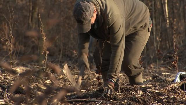 Esneux : la restauration de la forêt d'Avister