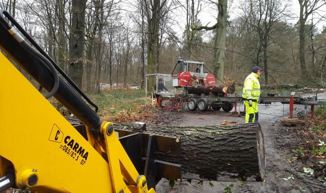 Huy : une scierie mobile pour valoriser les arbres communaux