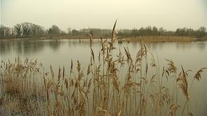 Hollogne-sur-Geer : chantier nature en faveur de la biodiversité