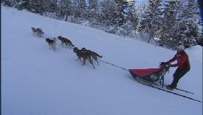 Jean-Luc Dawans, musher...