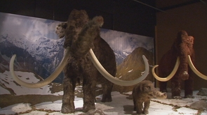 Géants de l' âge de glace au Préhistomuseum