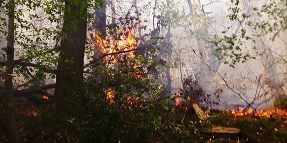 Imprudence de bûcherons et feu de forêt à Flémalle,